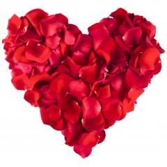 Rosenblätter rot 500 Stück